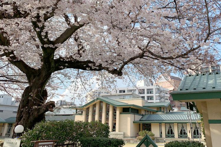 池袋の花見スポット『自由学園 明日館』あたりの桜を見てみた!