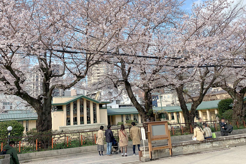 自由学園 明日館 桜 池袋