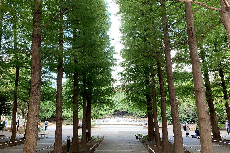 東池袋中央公園へ行ってみた! 景色や行き方を写真つきで紹介!