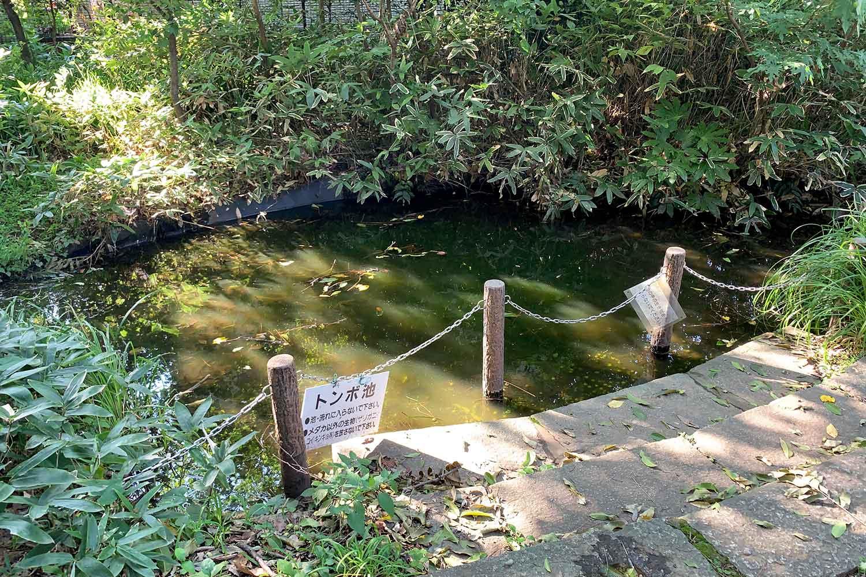 目白の森 トンボ池