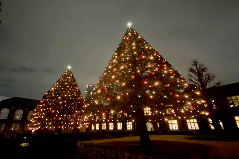 立教大学クリスマスツリーのイルミネーション鑑賞! iPhone11で夜景撮影してみた