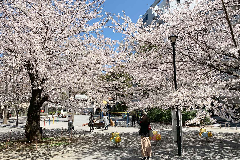 東池袋公園の桜