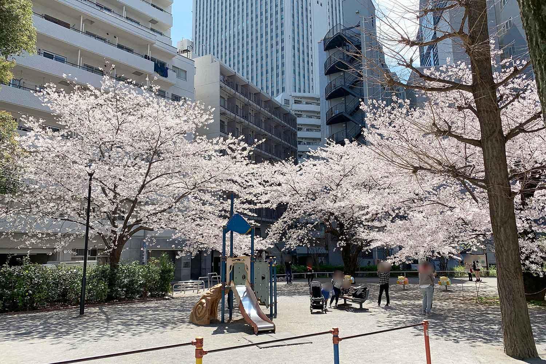 池袋で桜の写真撮影なら東池袋公園がオススメ! SNS映えスポット
