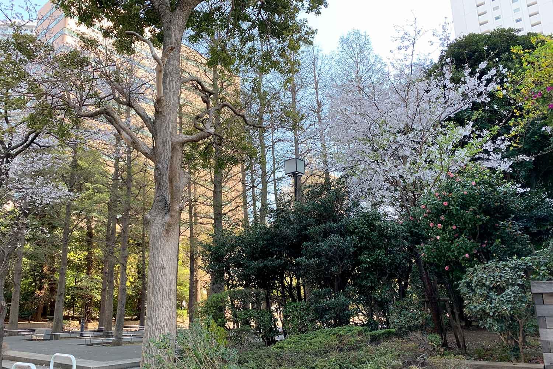 池袋で桜を花見! 東池袋中央公園は少しだけ咲いていた
