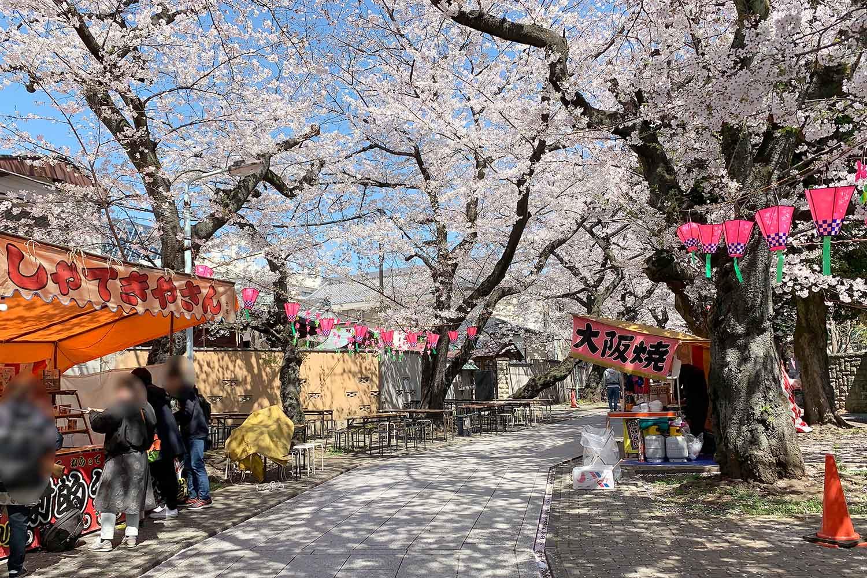 法明寺の桜