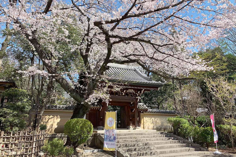 池袋で有名な桜スポット『法明寺』は美しい桜並木が見ごたえバツグン!