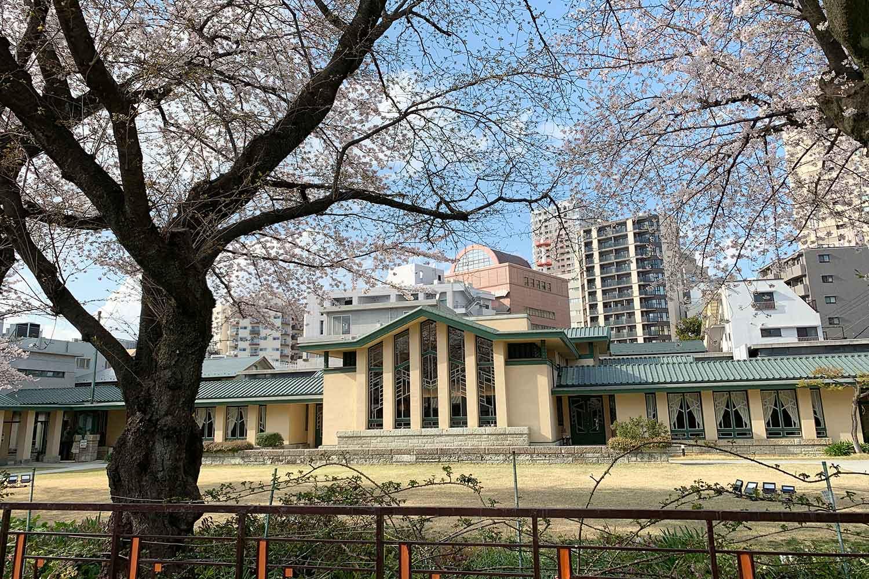 池袋で有名な桜スポット『自由学園明日館』を散歩してみた
