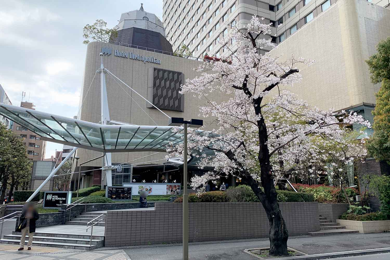 池袋で桜を花見! メトロポリタン前へ行ってみた