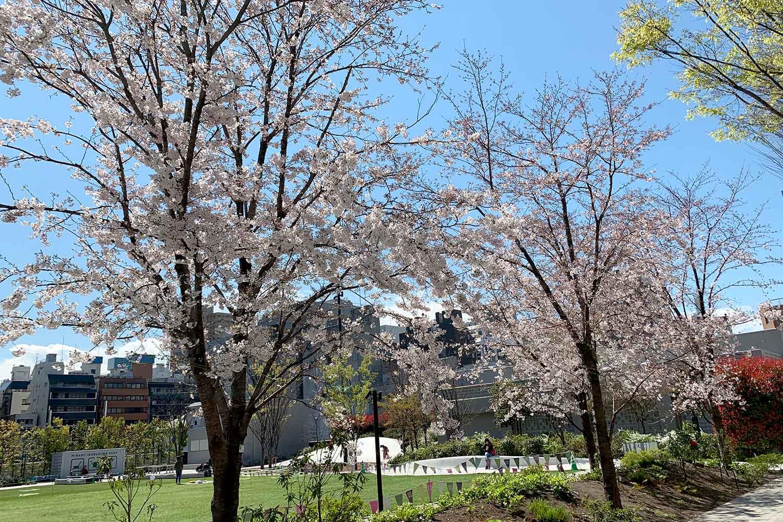 【池袋】桜・お花見スポットまとめ! 定番から穴場まで丸ごと紹介!