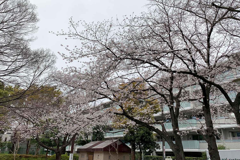 上り屋敷公園の桜
