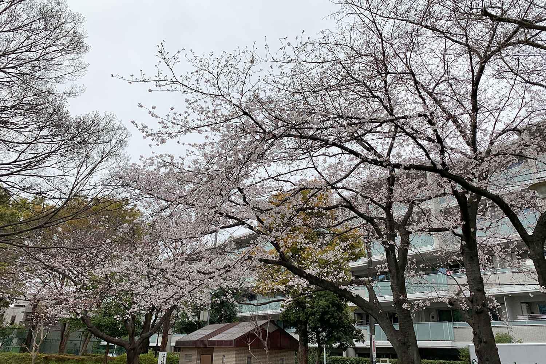 池袋で桜を花見! 上り屋敷公園へ行ってみた
